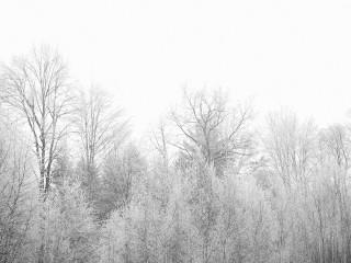 ★冬期休業のお知らせ★  平成27年12月28日まで通常営業です。