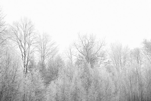 2015-11-Life-of-Pix-free-stock-photos-trees-frozen-snow-grzegorzmleczev